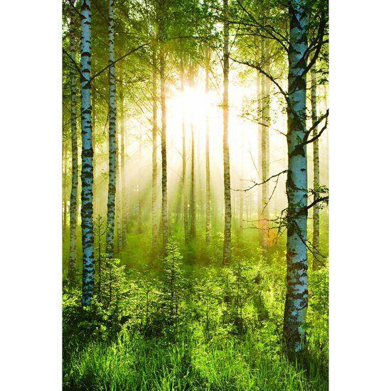 Fotobehang - Forest - 158 x 232 cm - Groen