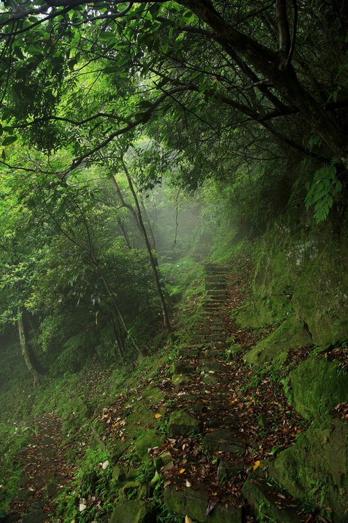 .Stairs, Walks, Wood, Nature, Green Forests Paths, Beautiful, Pathways, Places, Inspiration Lane