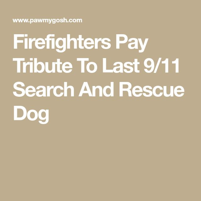 Firefighters Pay Tribute To Last 9/11 Search And Rescue Dog