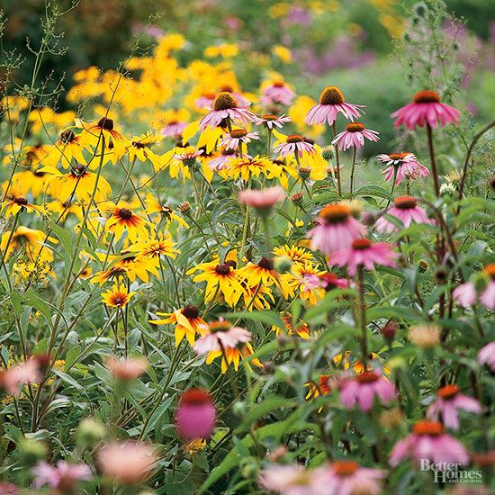Learn the ins and outs of when it's safe to start planting your garden annuals.