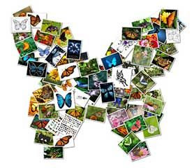 online collage butterfly Shape Collage Online Lets You Easily Generate Free Collages