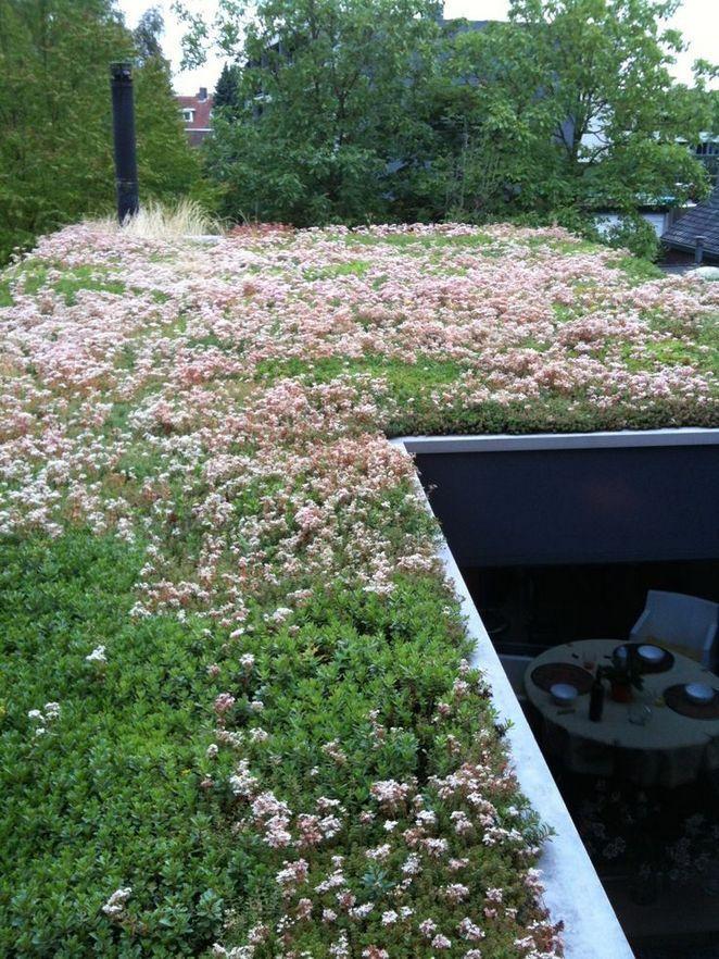 15 Details Of Green Roof Pecansthomedecor Sedum Roof Roof Garden Rooftop Garden