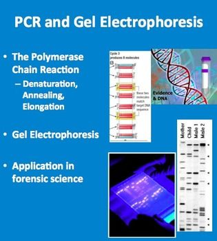 """polymerase chain reaction essay Polymerase chain reaction pcr """"pcr is one of those inventions like the internet, once you have used it, you cannot quite understand how people managed before it."""