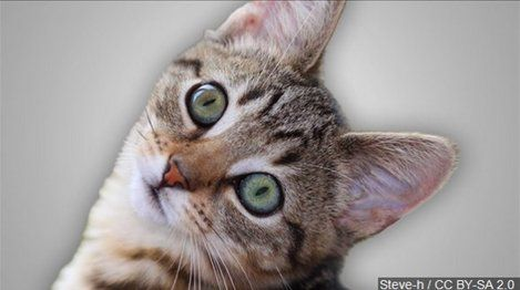 Missing cat found one year later, living in pet food warehouse