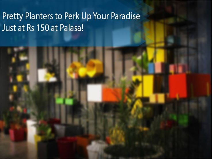 Pretty Planters to Perk Up Your Paradise Just at Rs 150! Address: No. 463, 5th Block, 17th C Main, Koramangala Contact: 8105629860 #HomeDecor #Pots #Plants #Gardening #Unique #planters #outdoor #StudioPalasa #CityShorBangalore