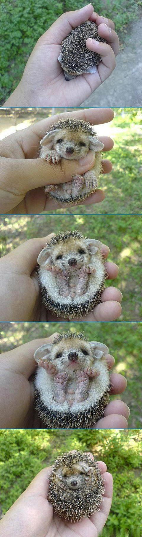 Baby hedgehog! I want one soooooo bad!! Forget this no animals in