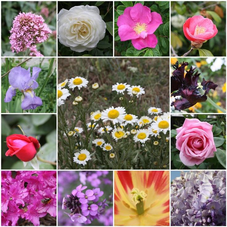17 Best images about FLOWER POSTS on Pinterest   Orange ...