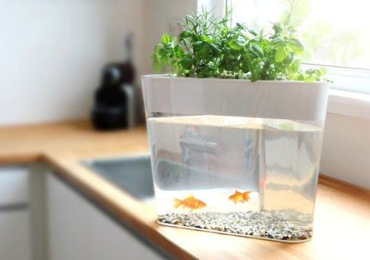Grow fresh herbs in style with the ecofarm aquaponics for Fish tank herb garden