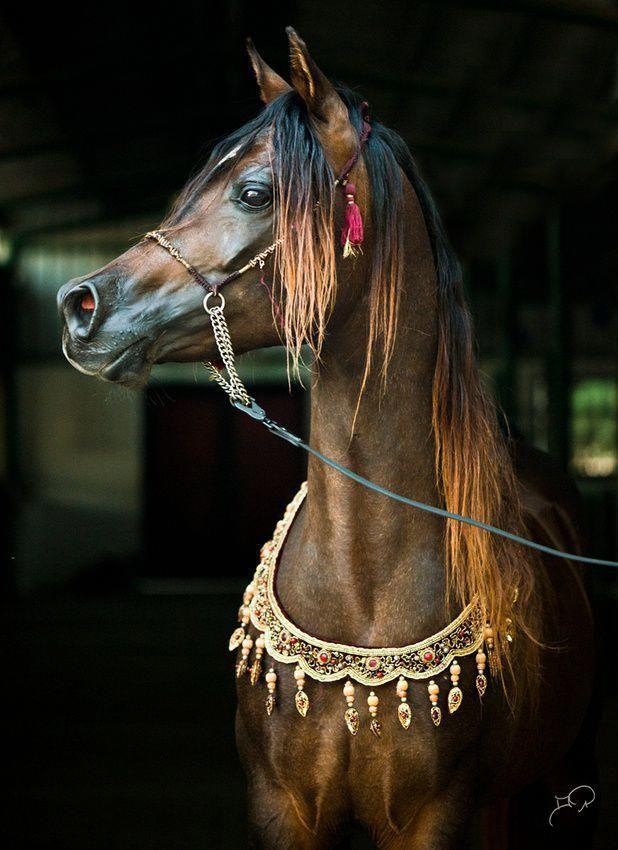 картинки нарядные лошади