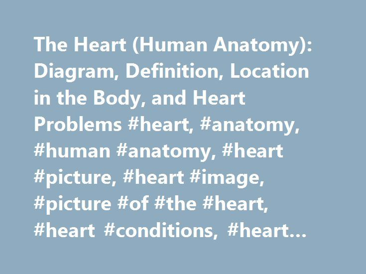 The Heart (Human Anatomy): Diagram, Definition, Location in the Body, and Heart Problems #heart, #anatomy, #human #anatomy, #heart #picture, #heart #image, #picture #of #the #heart, #heart #conditions, #heart #problems http://education.nef2.com/the-heart-human-anatomy-diagram-definition-location-in-the-body-and-heart-problems-heart-anatomy-human-anatomy-heart-picture-heart-image-picture-of-the-heart-heart-conditions/  # Picture of the Heart The heart is a muscular organ about the size of a…