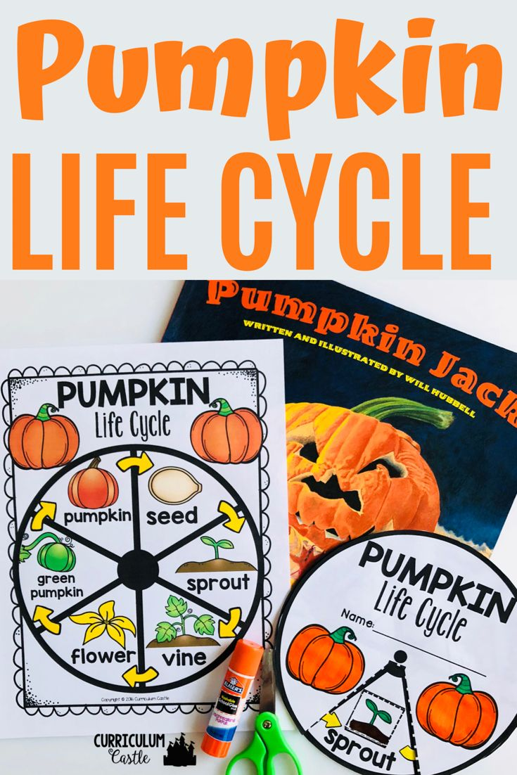 Life Cycle Interactive Wheels For The Year Life Cycles Pumpkin Life Cycle Cycle [ 1102 x 735 Pixel ]