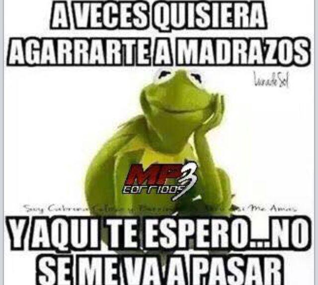 Funny Sarcastic Memes About Work : A puros madrazos rana rene pinterest memes humor