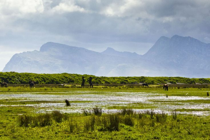The Wild Horses of Rooisand Nature Reserve | Xplorio
