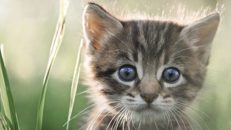 Pétition · Retrouvons et faisons condamner les tortionnaires du chaton égorgé à Antoine et Trigonnant · Change.org