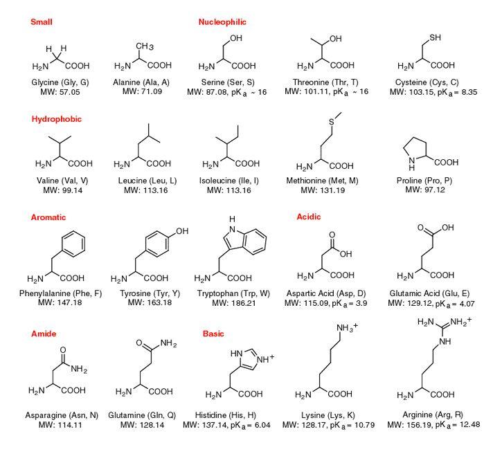 Best Science Images On   Amino Acids Autoimmune