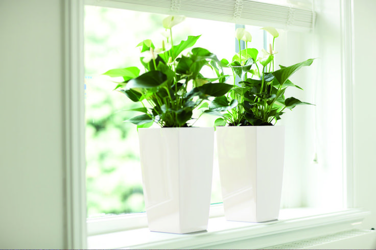 Jak dbać o rośliny doniczkowe w styczniu? - Inspirowani Naturą | white flower pots, design