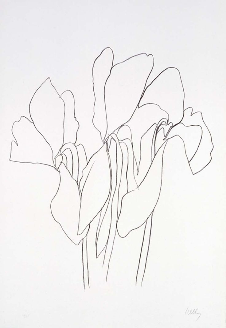 Line Drawing By Matisse : Best ideas about matisse drawing on pinterest henri