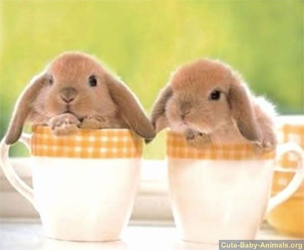 cute baby bunnies sitting in cups just some baby