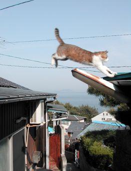 猫写真【猫ジャンプ!】 : 【BlueNote】 鞆の浦+野良猫+風景写真と絵手紙/TOMONOURA■広島福山