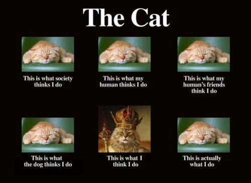 "The CAT ! Note the : ""This is what I think I do"""