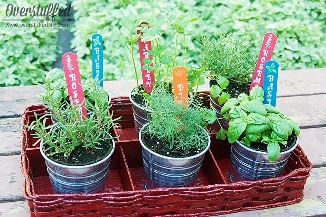 I love this! Everyone can use an herb garden. A patio is the perfect place for an herb garden!!