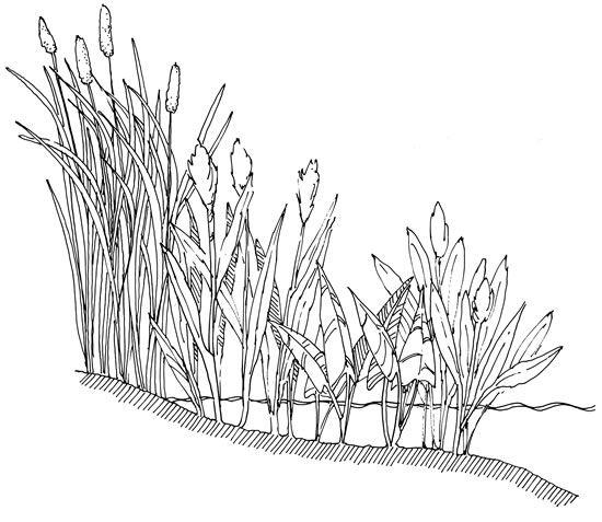 8 best Rendering-Vegetation images on Pinterest