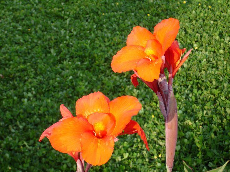 Spiritual Treasures Kriya Yoga Download Beautiful Flowers Pictures Flower Wallpaper Most Beautiful Flowers