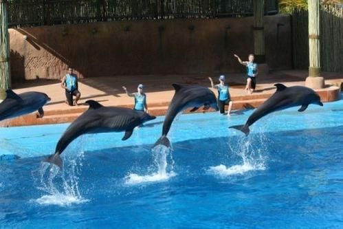 The opportunity to watch the #dolphin show at uShaka Marine World with mountziontours.