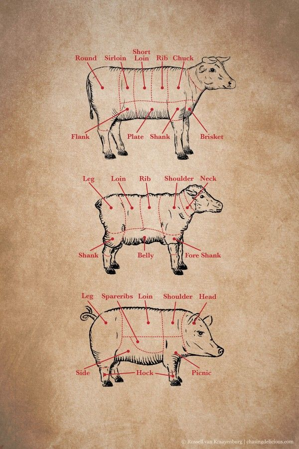 Kitchen 101: Meat Cuts | Chasing Delicious
