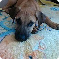 Adopt A Pet :: Mega - Long Beach, CA