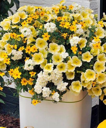 Kwiaty zawsze kojarzą się z pięknym i zadbanym ogrodem.