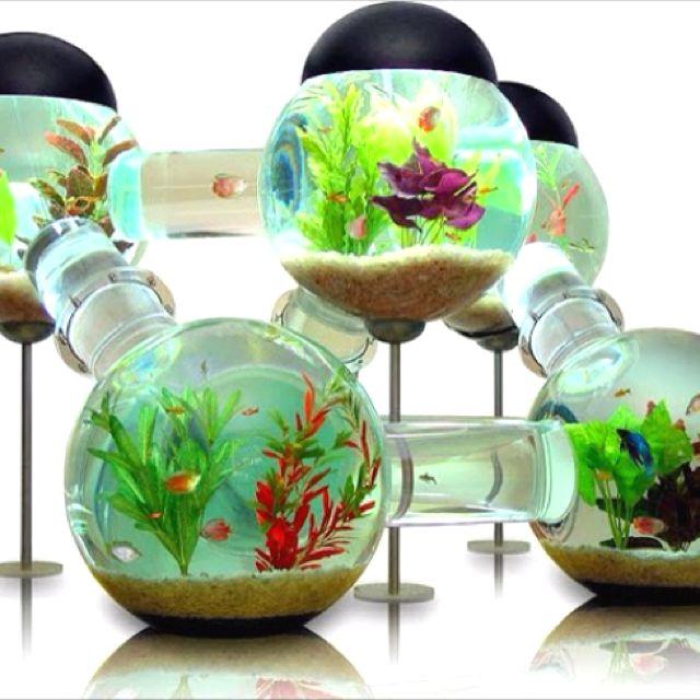 42 best betta fish tank ideas images on pinterest unique for Multiple betta fish tank