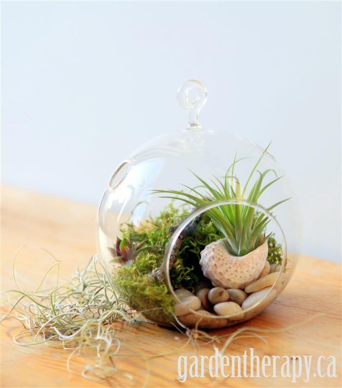 How to make a hanging globe #terrarium with #Sedum and #Tillandsia aka air plants.