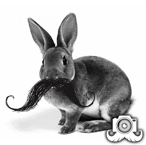 First day of spring! Rabbit mo.