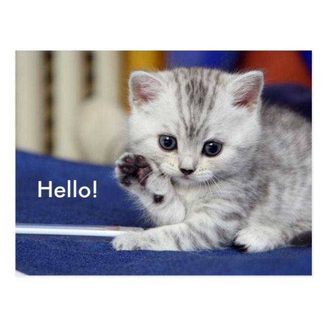 Cute Kitten Postcard Zazzle Com Kittens Cutest Cat Facts I Love Cats