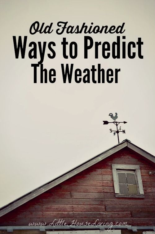 Old Homesteader ways to predict the weather