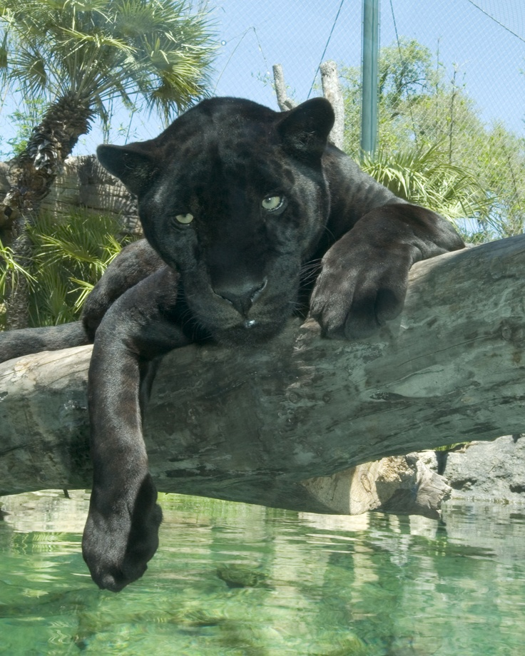 Throughout January 2012 This Florida Zoo Is Offering
