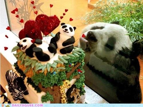 Panda wants panda cake!