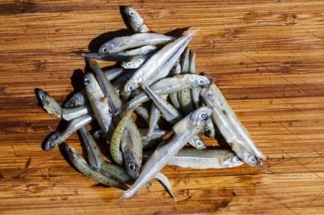 Nej tak: Se 10 gode fisk og skaldyr, som vi sender ud af Danmark - Politiken.dk