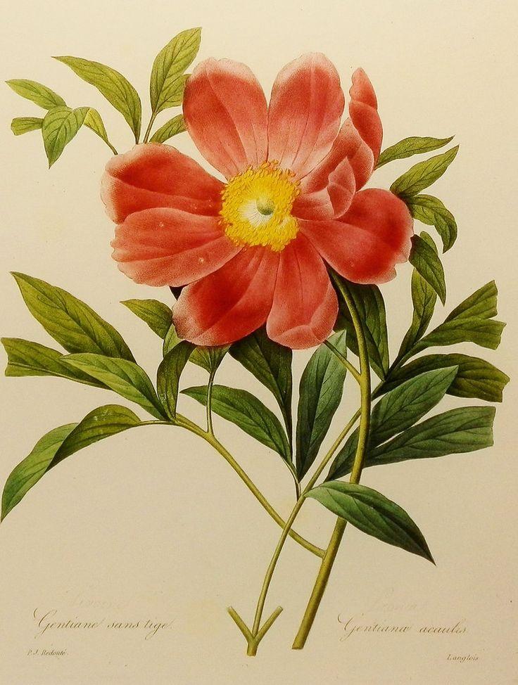 Винтажные иллюстрации: цветы, птицы