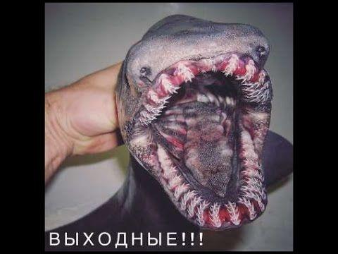 Pescador de águas profundas publica imagens de peixes assustadores.