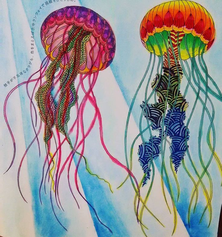 Animal Kingdom Coloring Book Jellyfish Best Images About Millie Millot On