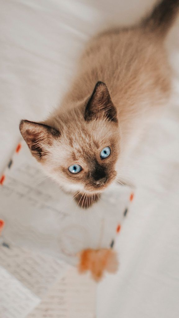 50 Of Unique Cat Names For Girls And Boys Unique Cat Names Cat Names Girl Unique Cute Cat Wallpaper