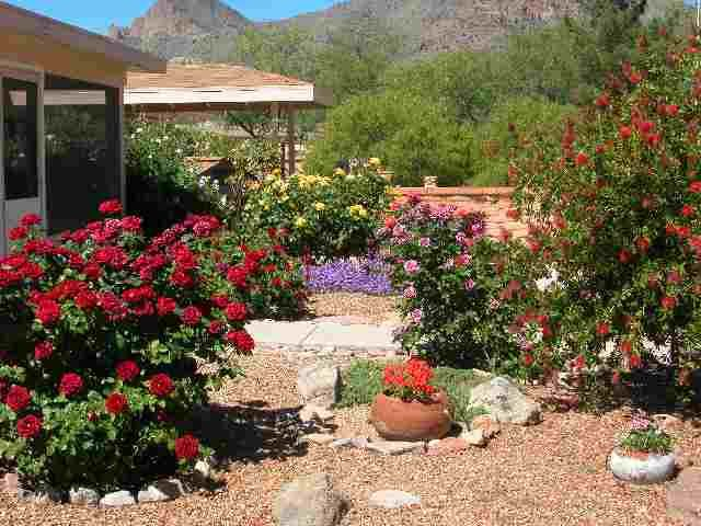 An Arizona Garden   Like The Mix Of Pots And Plants, Plus The Colorful  Bushes