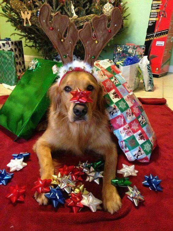 Christmas Tree Pembroke Ma
