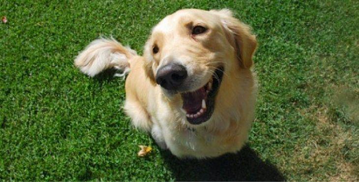 1000 id es sur le th me chiens heureux sur pinterest produits pour animaux de compagnie chien - Produit pour empecher les chiens d uriner ...