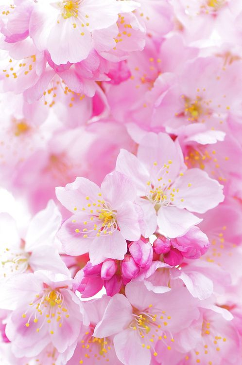 eyesfornature:   Sakura / Happier Than Yesterday  by  *Sakura*