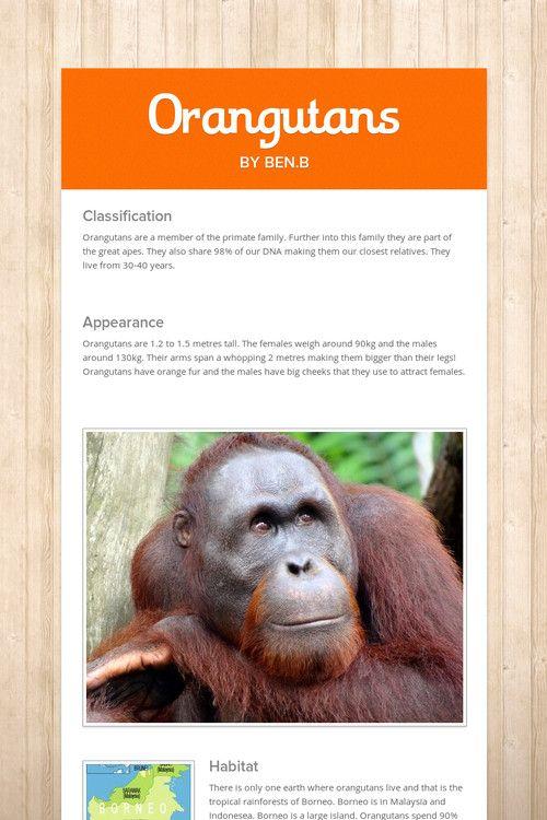 Orangutans by Ben B
