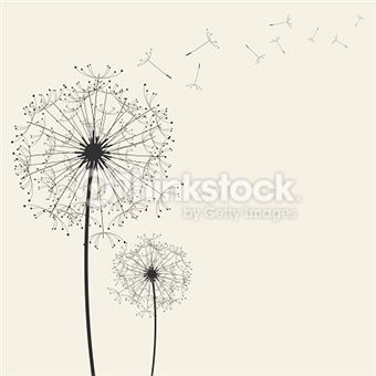 Fleur De Pissenlit photos et illustrations - Images libres de droits - Thinkstock France