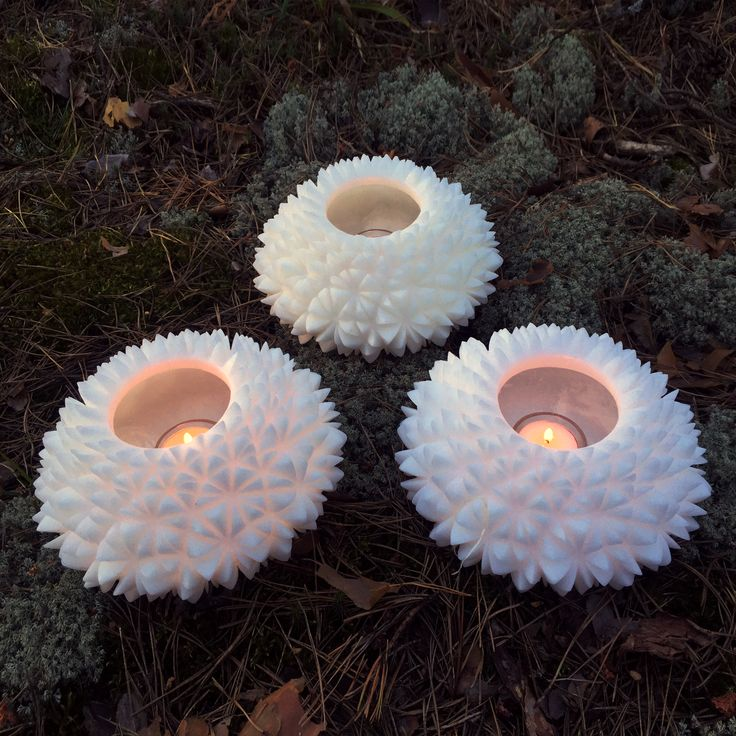 candle-luminary Aster